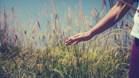 Seed of Hope